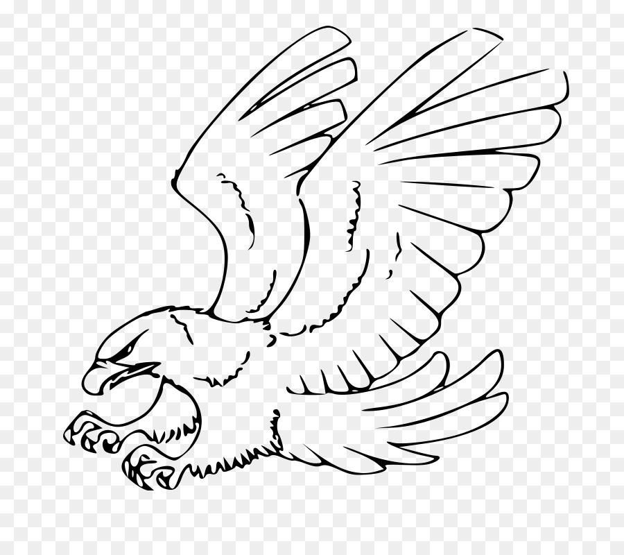 рисунок орла в полете правильно выбрать
