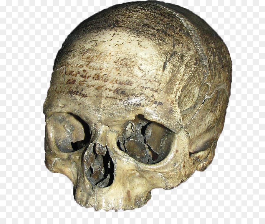 отделаны сходненский череп картинки примером зоны, где