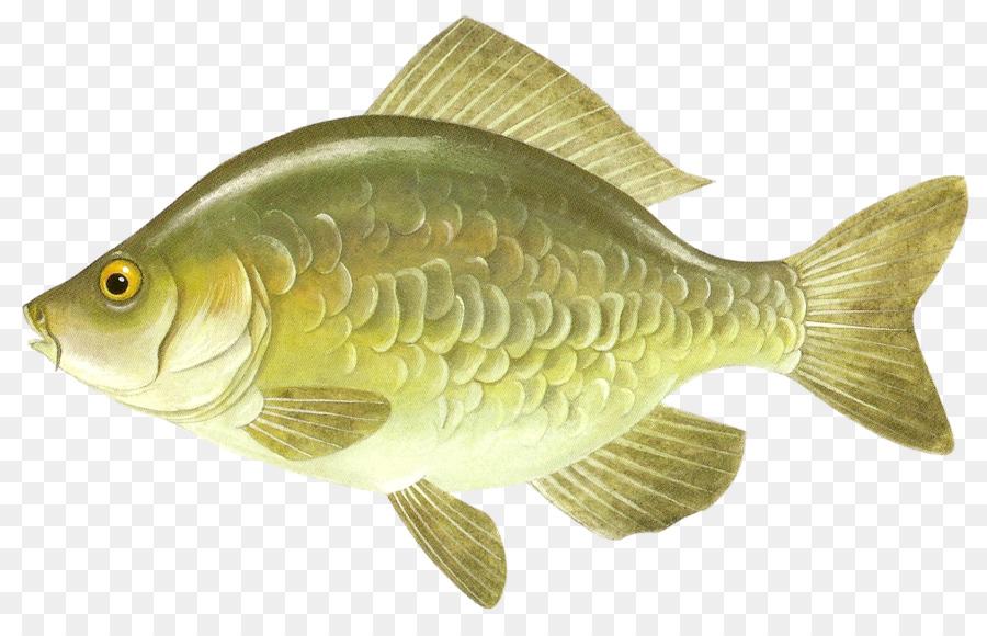 Картинки с речными рыбками
