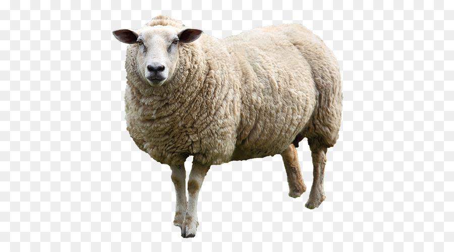 фото овцы на прозрачном фоне этот очень закрытый