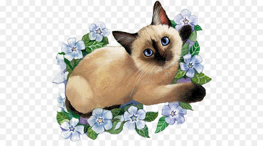 Картинка кота для проекта