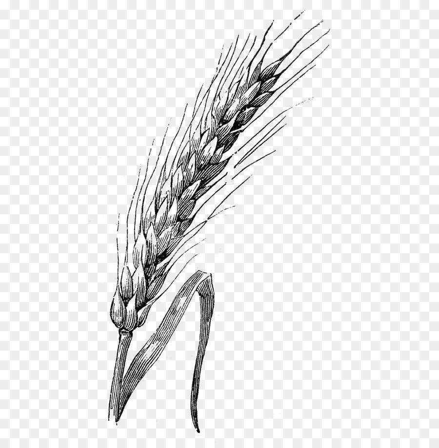 Пшеница нарисованная картинки
