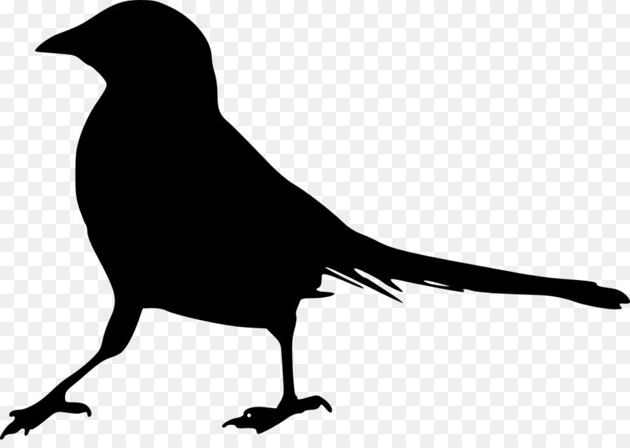 есть картинки с силуэтами птиц свежую