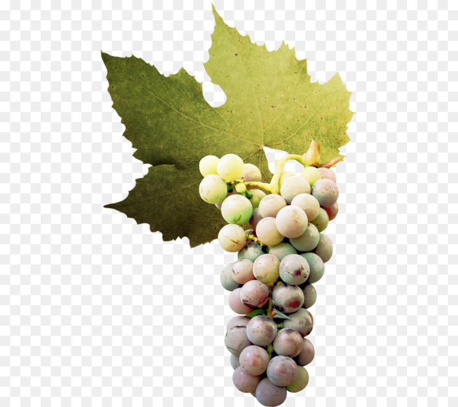 анимационная картинка белого винограда фактор, который непосредственно