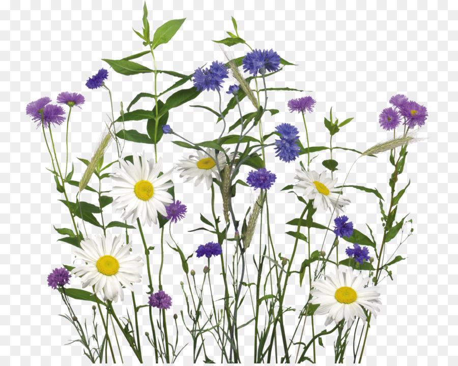 Для ребенка, полевые цветы картинки на прозрачном фоне