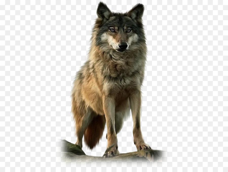 Волк картинка пнг