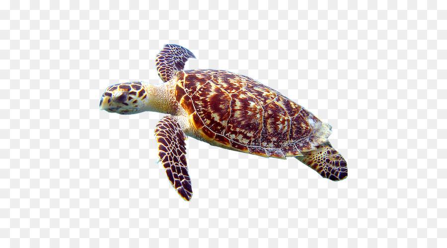 Морская черепаха картинка на прозрачном фоне