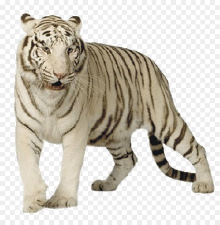 Картинки на белом фоне тигр