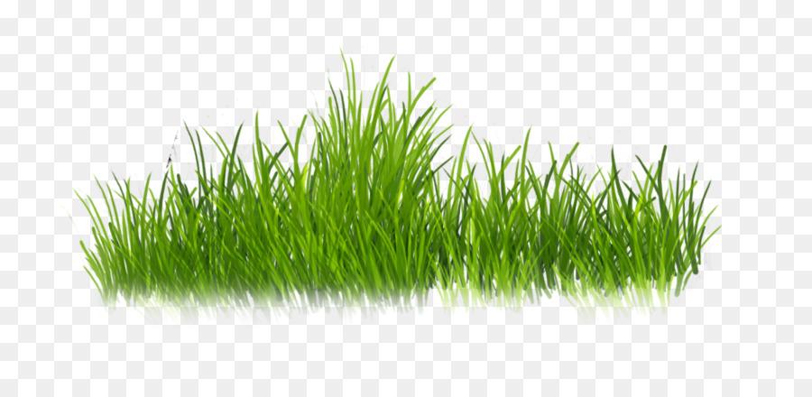 Картинки зеленая трава для детей