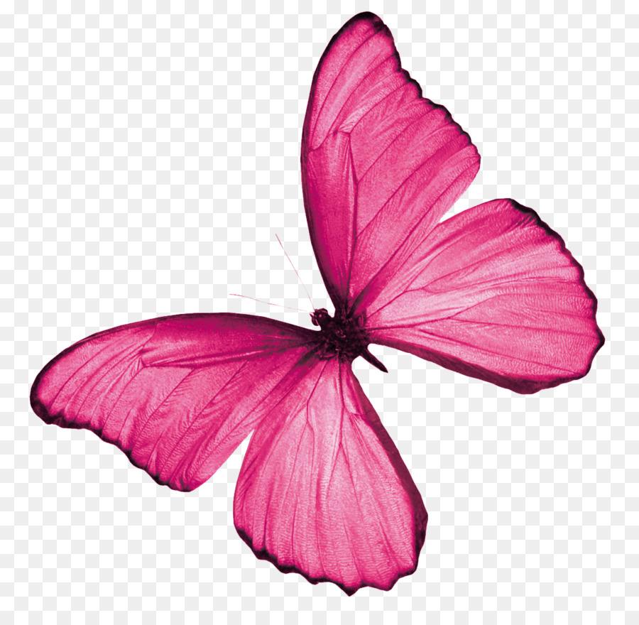 розовые картинки на прозрачном фоне части