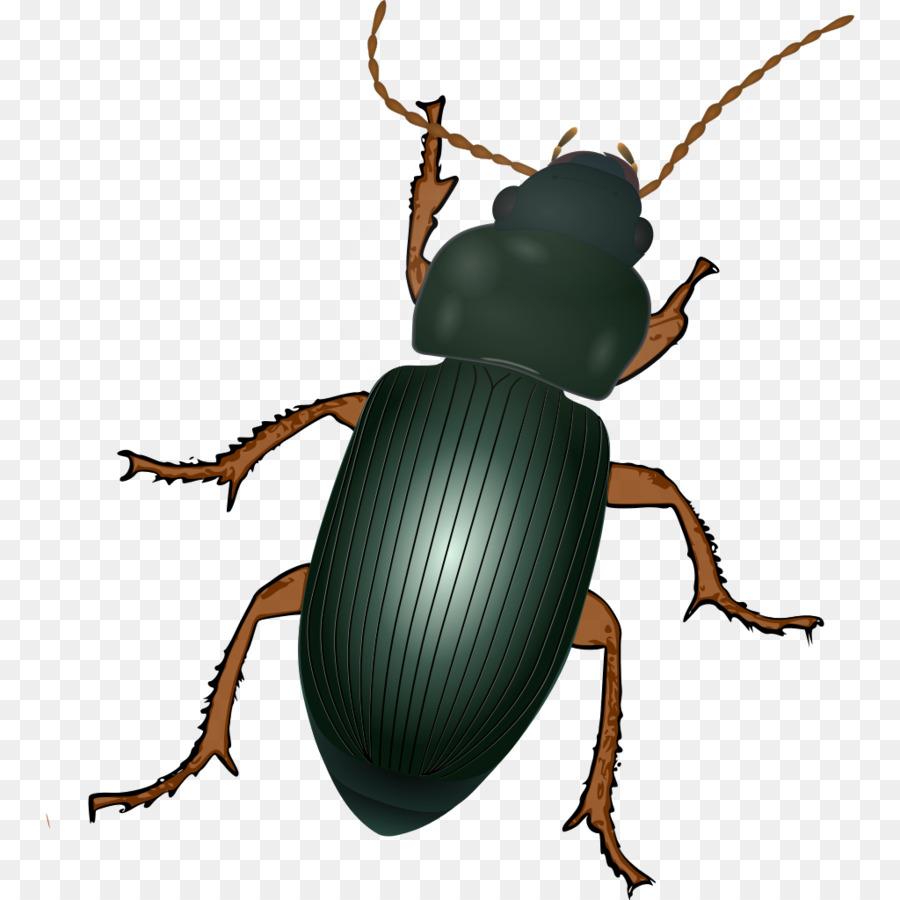 Картинки с изображением жуков