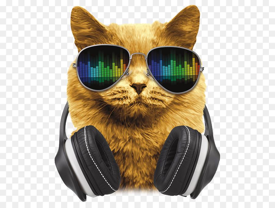 Картинки котов в наушниках и очках