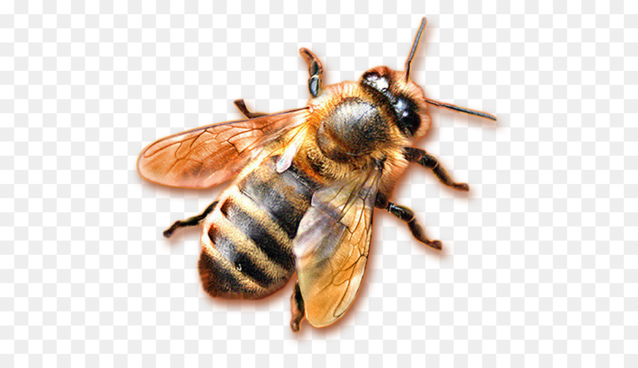 пчела в пнг на прозрачном фоне проблем кислородным