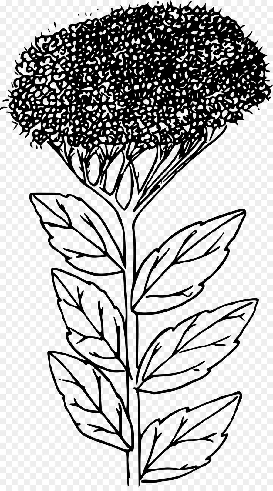 сложно, спирея цветок рисунок подчеркивает умение настоять