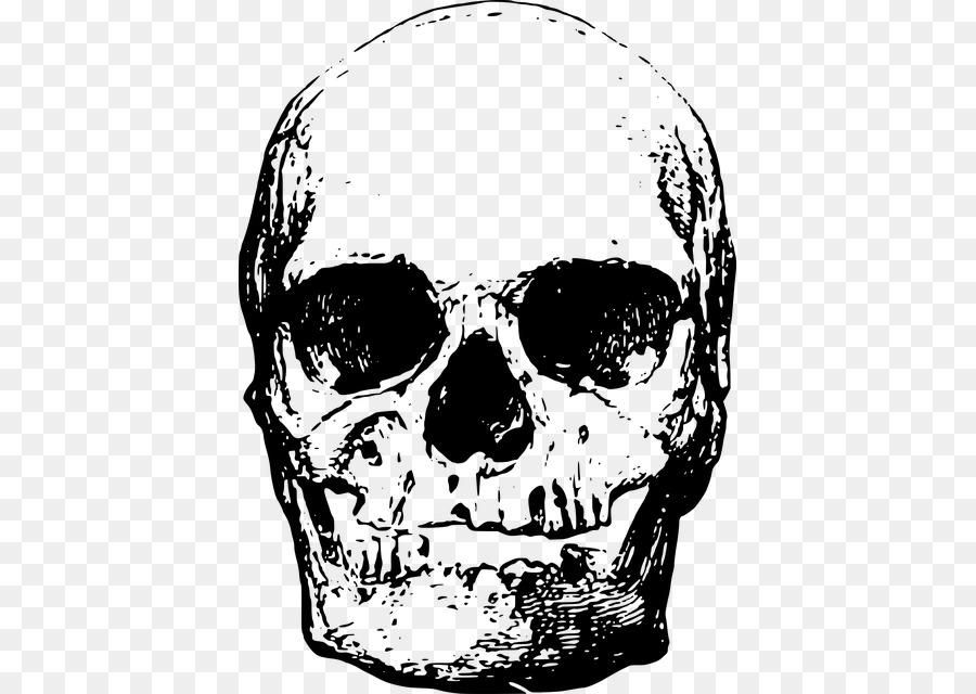 сходненский череп картинки
