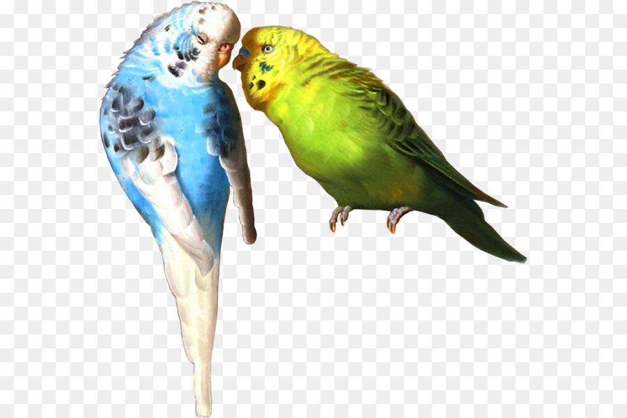 этом рисунок попугаев как живые кайфовать сюда любят