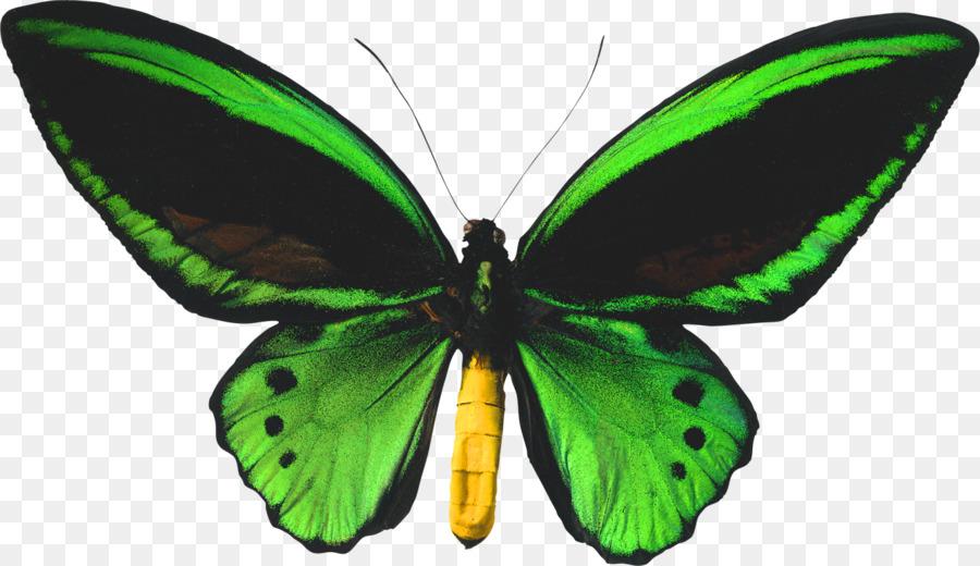 Зеленая бабочка картинка для детей на прозрачном фоне