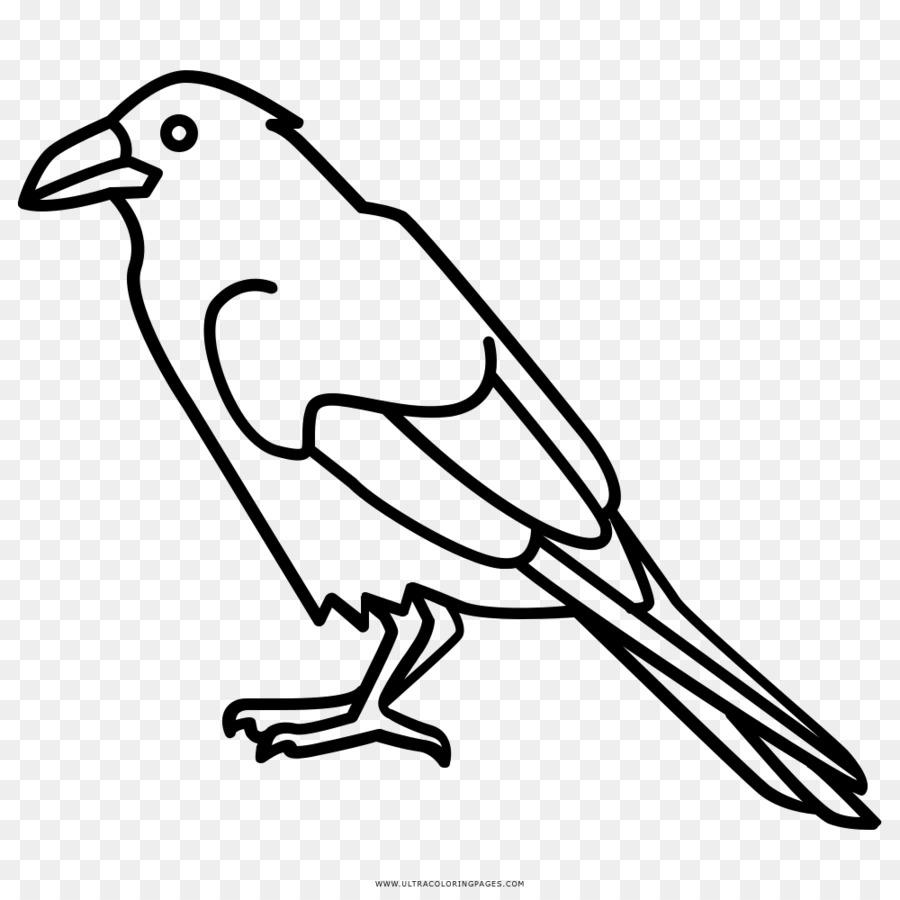Ворона картинка для раскраски