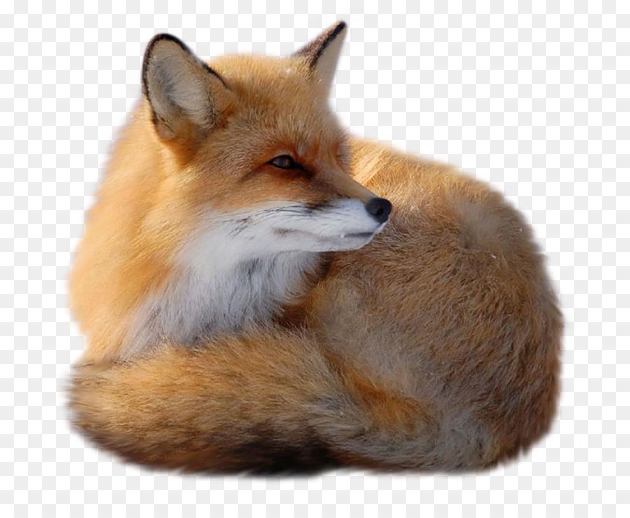 Картинка для презентации для детей лиса