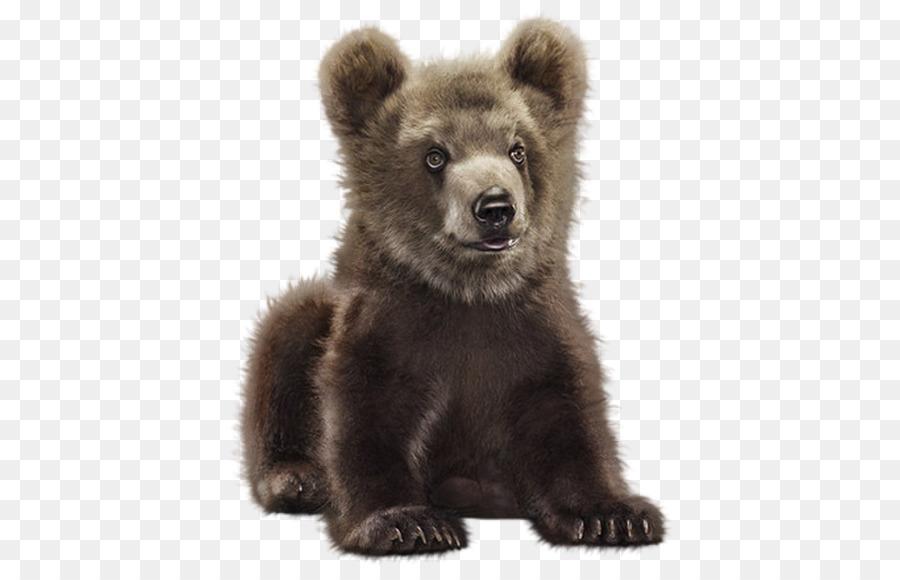 Медвежата картинка на прозрачном фоне, акварель цветы