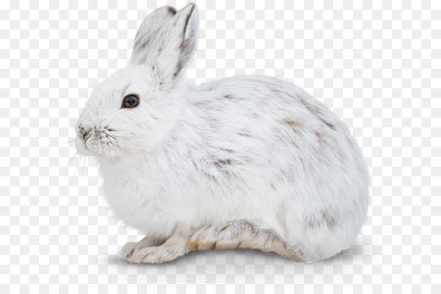 Белые зайцы картинки для детей