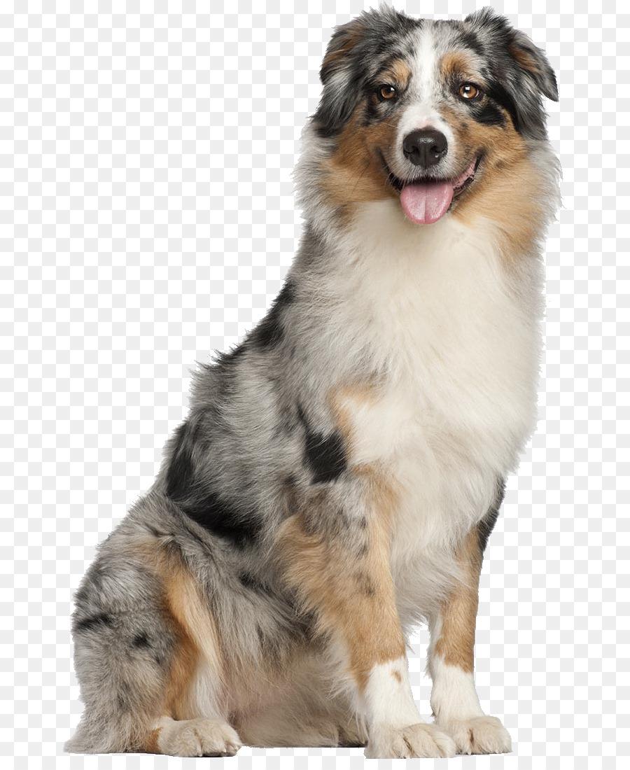 hondenliefhebbers datovania