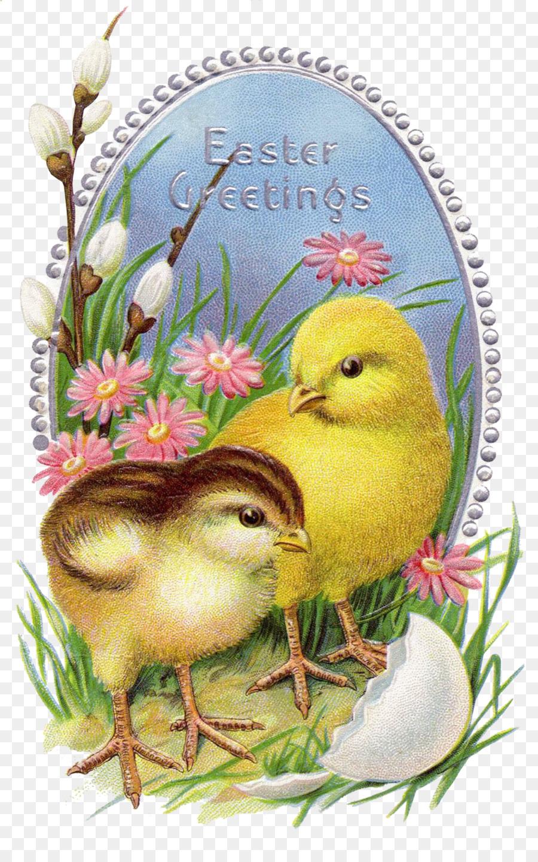 Пасхальная открытка цыпленок, рождением