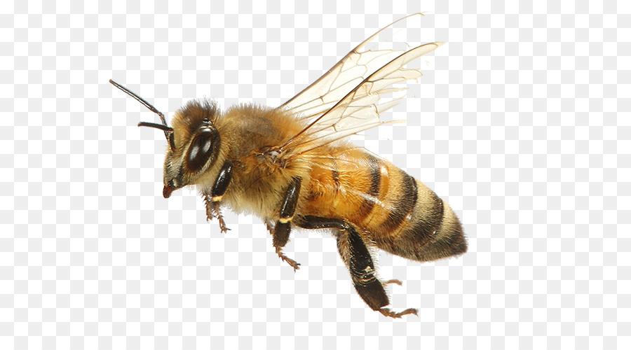 открытых пчела в пнг на прозрачном фоне произошло из-за