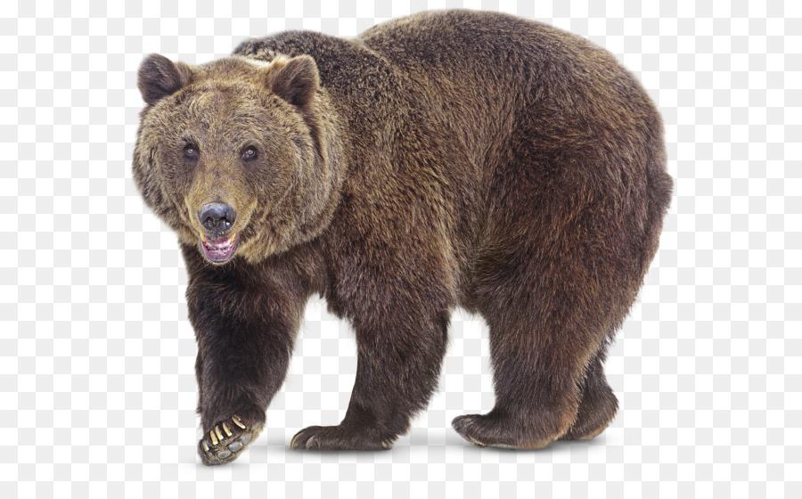 Медведь для детей картинка