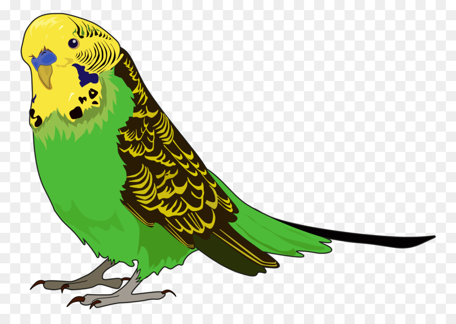 Картинки про попугаев для детей