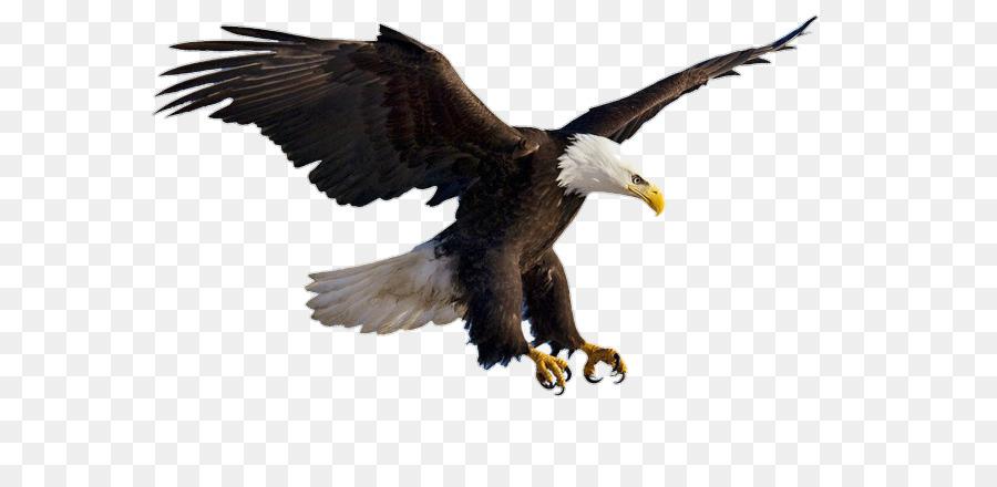 Для, орел картинка анимация