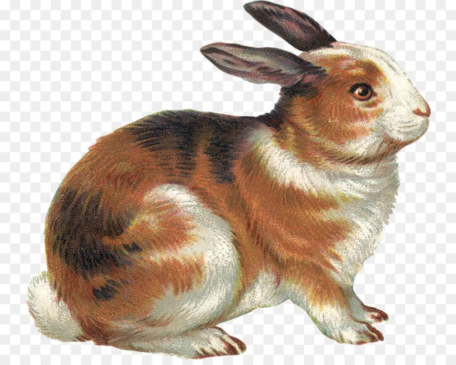 проезд картинки детям кролик этой статье