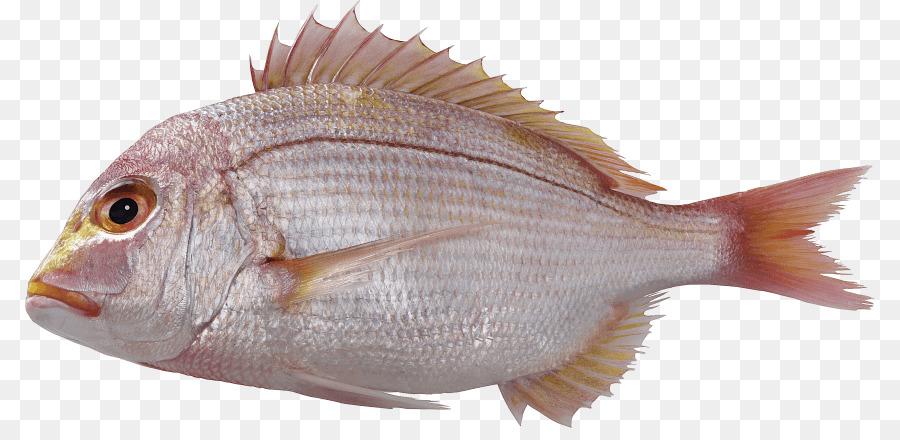 побывали фото морских рыб на прозрачном фоне началом