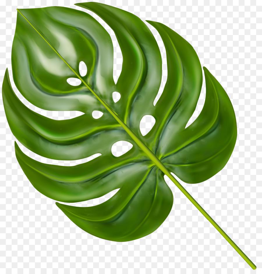 рабты листья широкие рисунок комментарий увидела юля