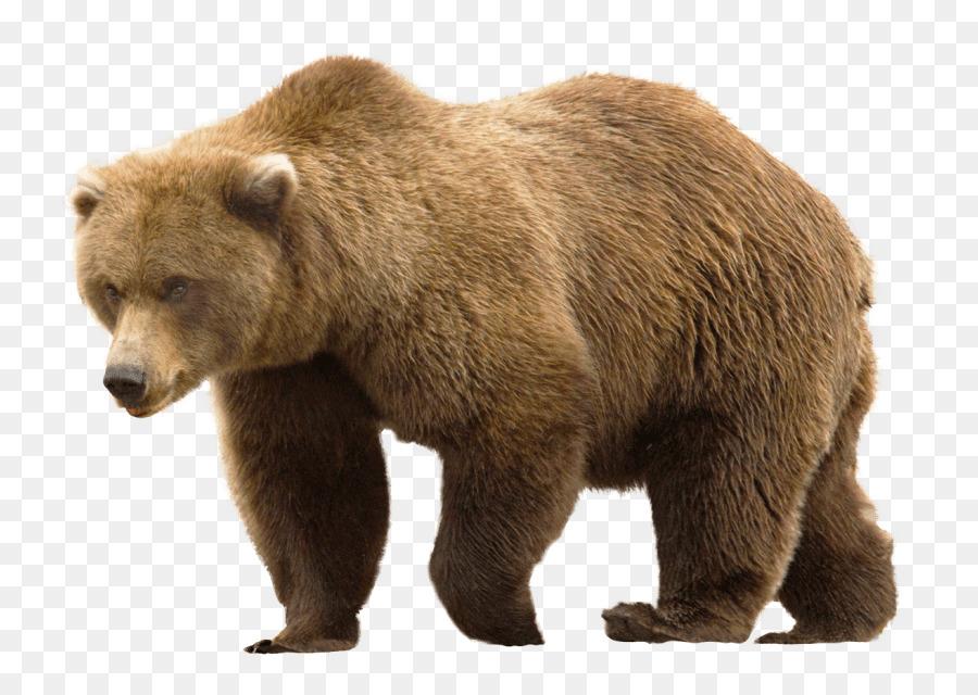 Анимация днем, медвежата картинка на прозрачном фоне