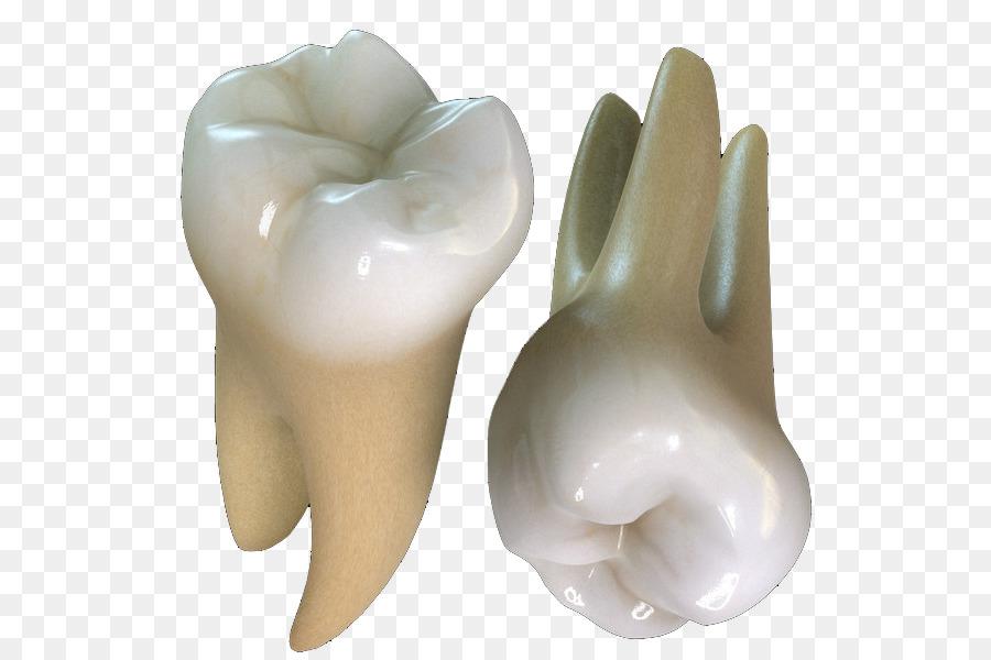 картинки зубов человека с корнями или