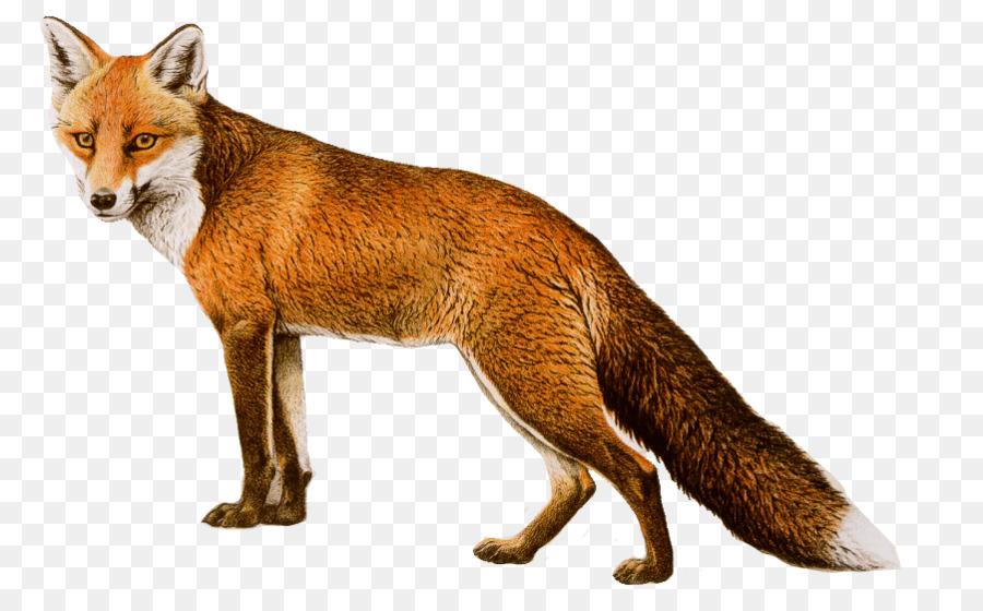 Картинка животных лиса для детей