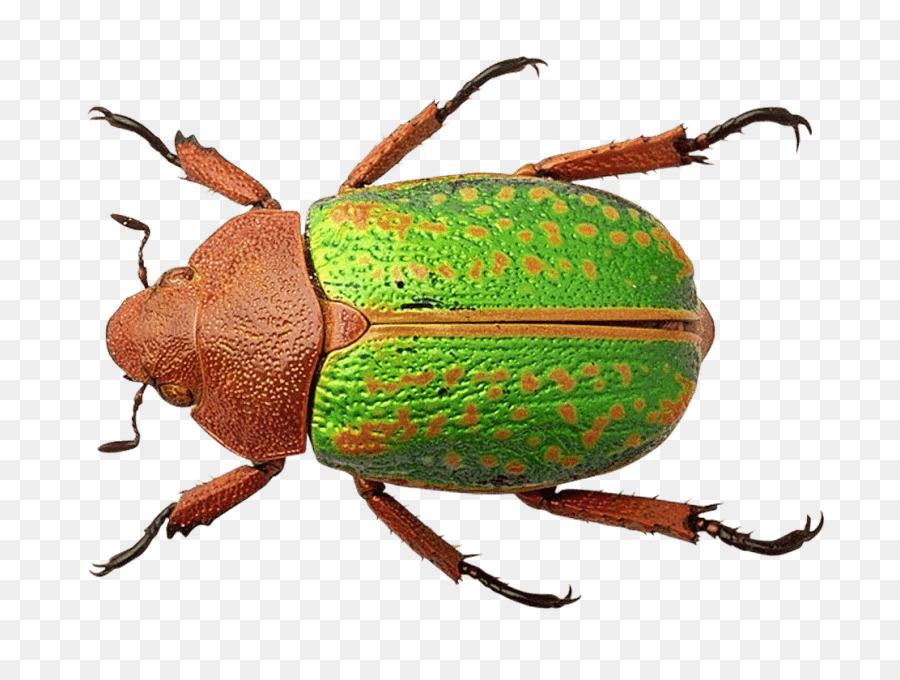 понравились большие цветные картинки жуков проблеме