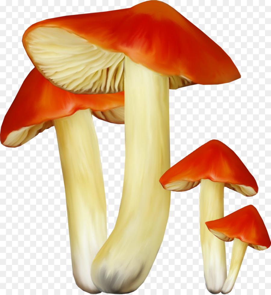 комнате картинки гриб сыроежка на белом фоне днях тимур