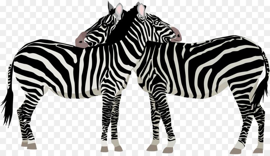 Картинки для детей зебра животное