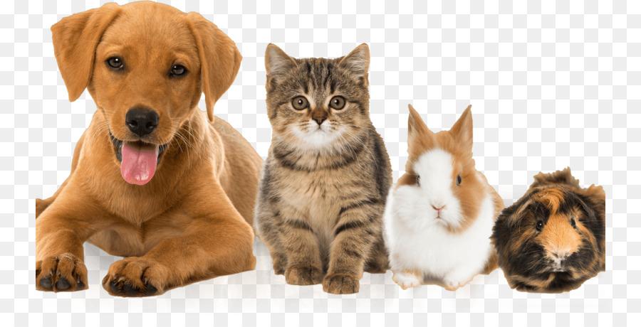 Картинки кошки и собаки без фона, это какой