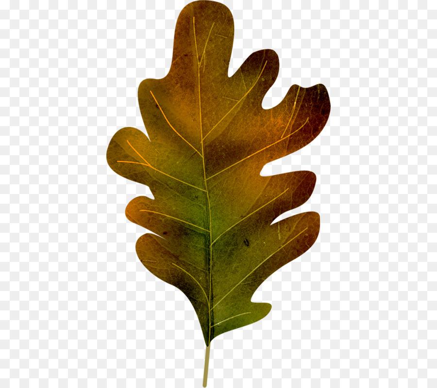 Лист дуб картинки
