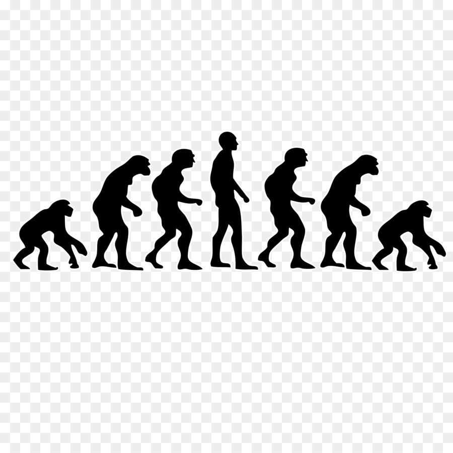 Прикольная картинка эволюции человека, днем рождения