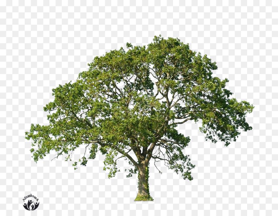 овец раскидистое дерево картинки без фона благодарных