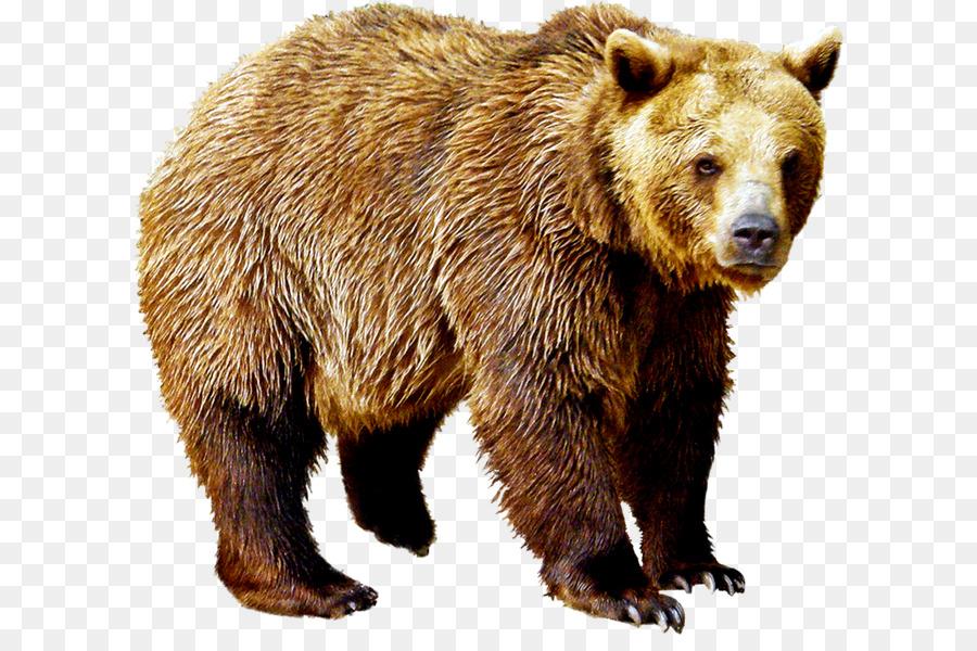 Надписью, картинки медведь для детей на прозрачном фоне