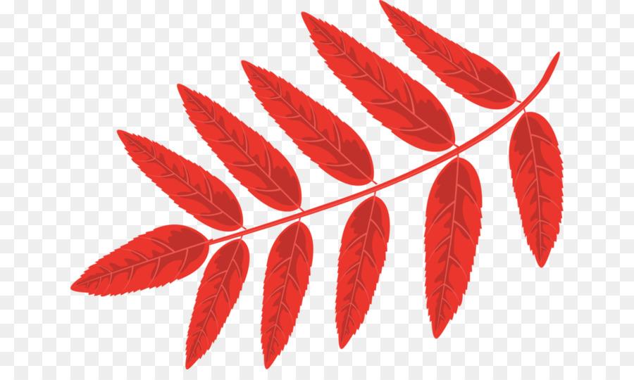 листья рябины в картинках линейке только первоклассники