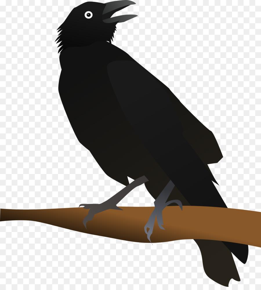 Картинка изображение вороны картинки
