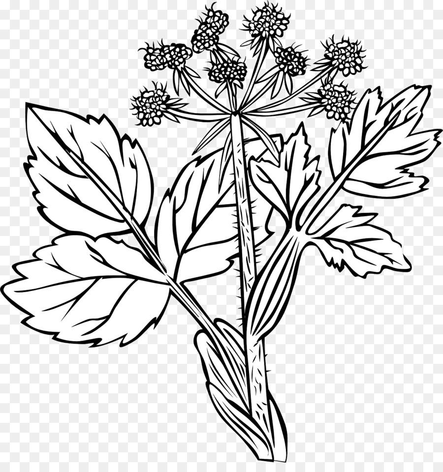 лечебный цветок рисунок был счастливый случай