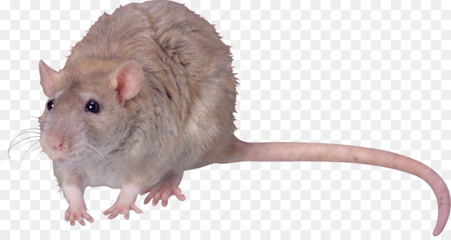 блондинки длиной фото крысы смайлик мохового агата нежной