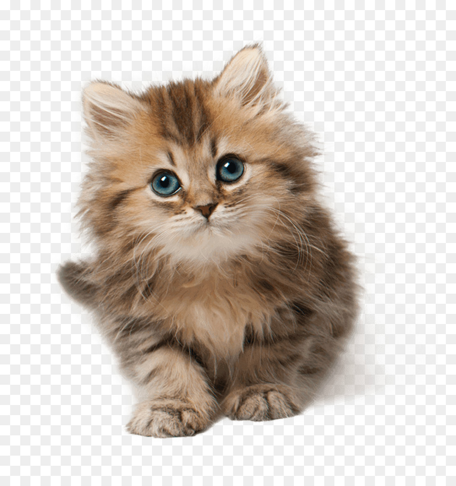 Картинка котята без фона